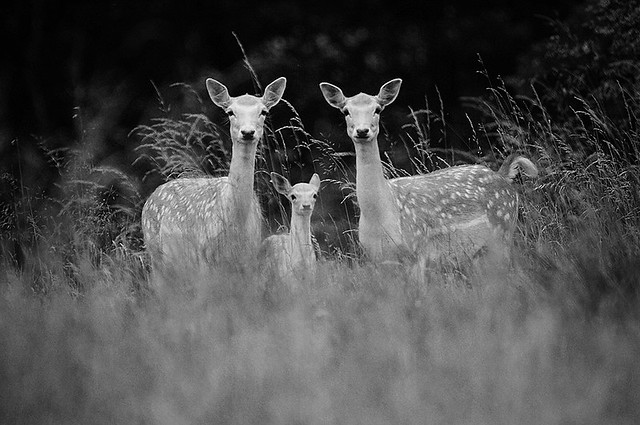 Does & Fawn