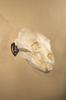 SkullHooker 17