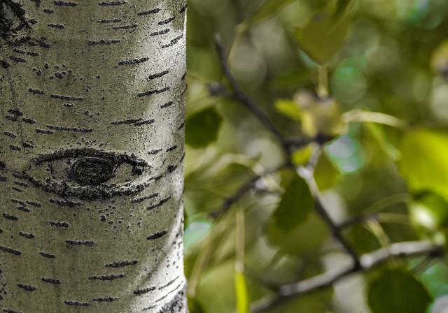 Ghillie Dhu.Guardián de los árboles.