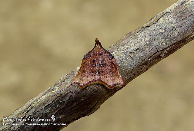Moth - ID verfy welcome