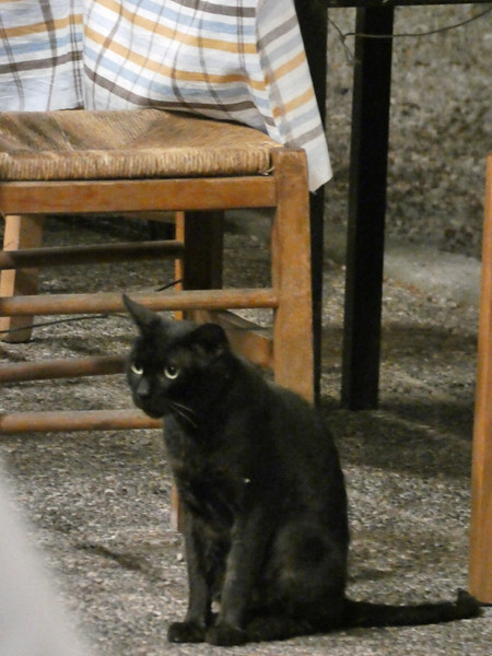 chat noir sous la table