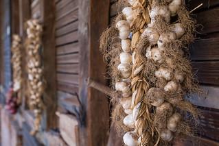 Close-up of a garlic braid on a farm