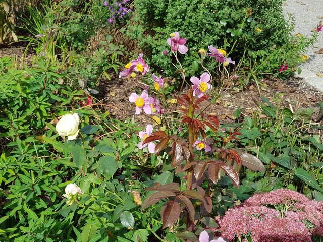 Septemberblüten / September flowers / fleurs septembre