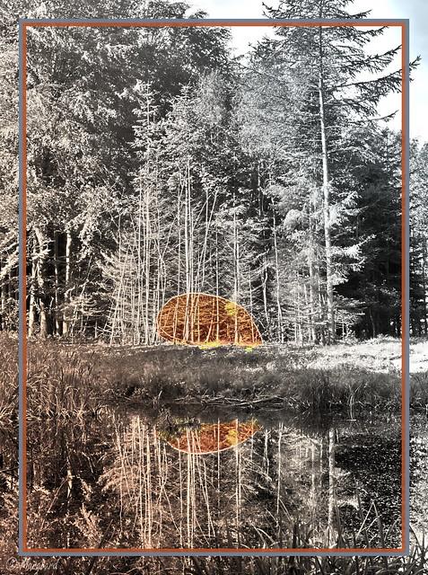 Ein Kreis im Kvottrupen Wald, Ostjütland