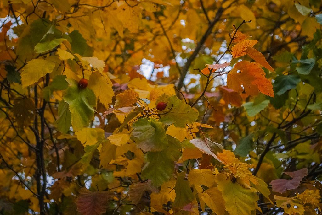 Pretty Autumn ! 08:27:54 DSC_3818