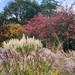 Autumn at Knoll Gardens