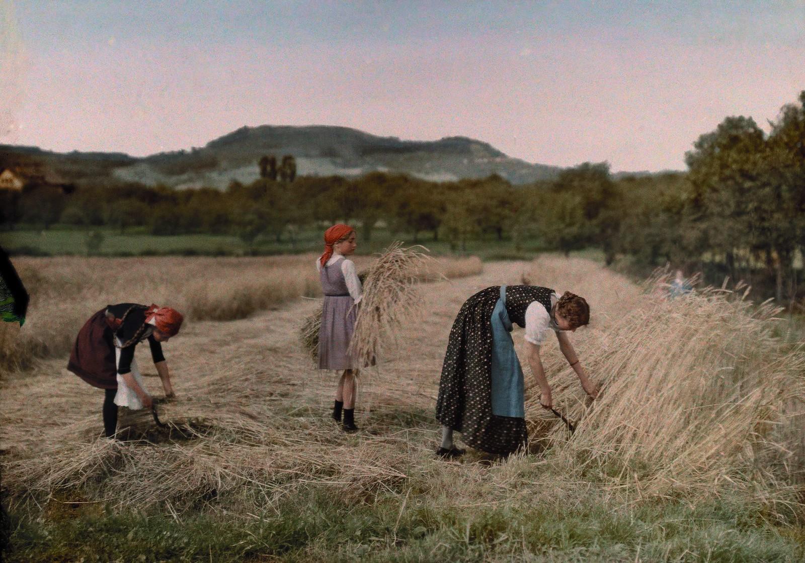 1928. Три женщины, связывающие снопы в поле во время сбора урожая. Германия