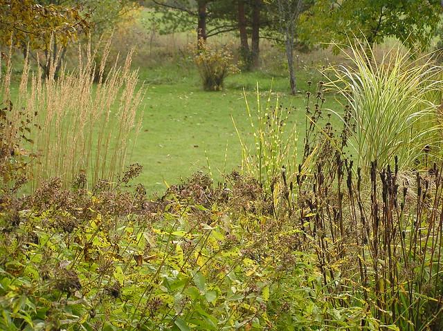 Grasses in Peennials Bed