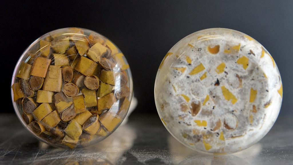 Cultivo de hongos sobre colillas