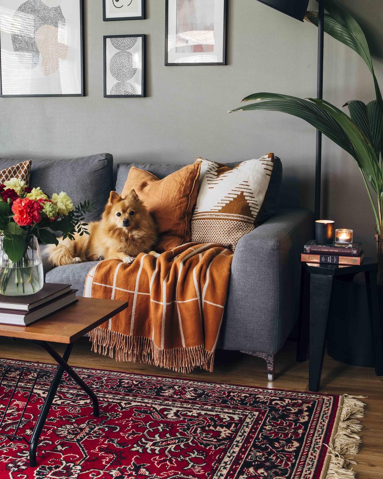 Koira makaa harmaalla sohvalla ja katsoo kameraan. Sohvan edessä on sohvapöytä, jolla on kukkakimppu.