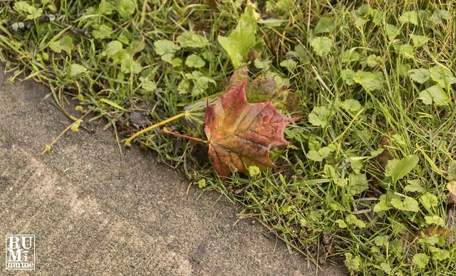 Outdoors in the Fall - AKA Wandering Niagara with a Camera