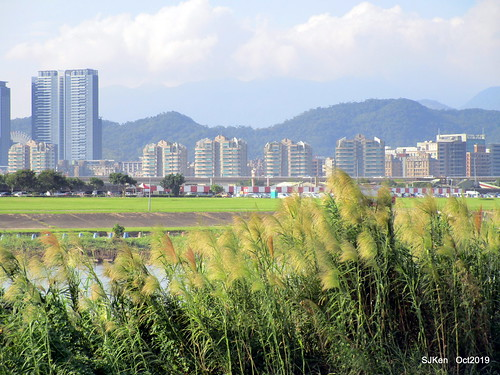 The sunflower field at the Keelung river coast, Taipei, Taiwan, SJKen, Oct 6, 2019