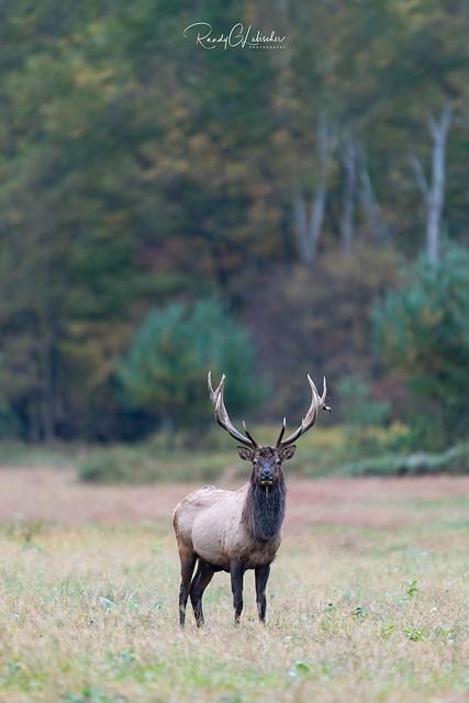 Elk of Benezette | 2019 - 20