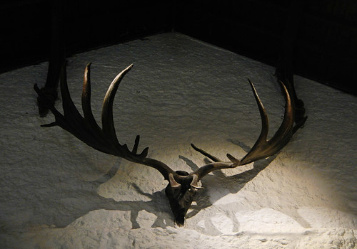 Stag horns decorate the ancient walls of Cahir Castle in Ireland