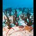 MALtub-micrantha2773_010315