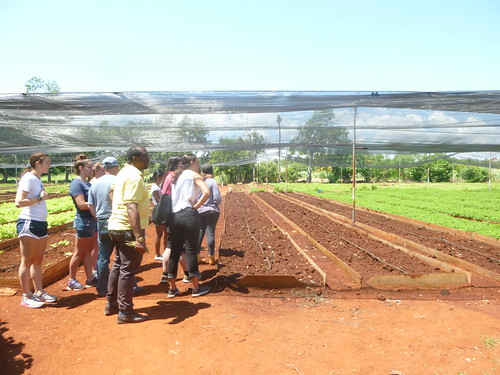 Students visit Sarcines urban agriculture operation in Alamar, near Havana. Photo by Ana Legrand.