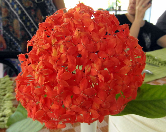 kerala flowers (2)
