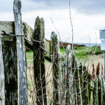 Old Fence!