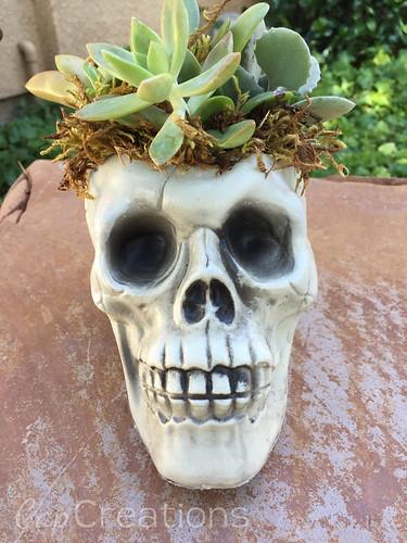 Easy Skull Succulent Planter