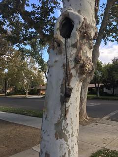 Tree hole hide