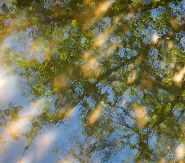 Water Texture: Branches and dappled sunlight reflecting on the water of a small stream in Tanum, Sweden