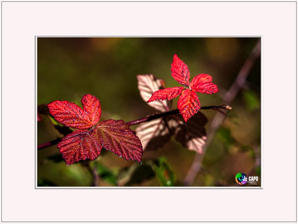 """""""A l'automne des saisons, ce sont les feuilles qui meurent. A l'automne de la vie, ce sont nos souvenirs.""""  De  Flor Des Dunes"""