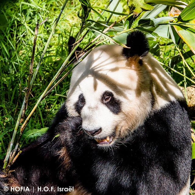 20190609 - Ouwehands dierenpark