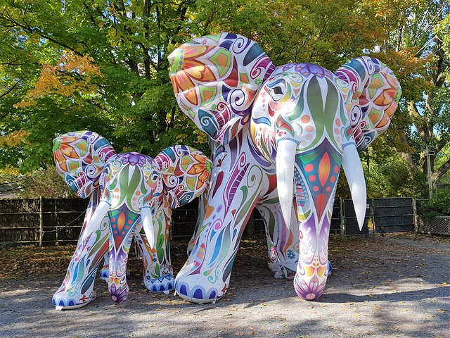 Deux Éléphants Gonflables Au Zoo. 2019 10 05 14:08.11