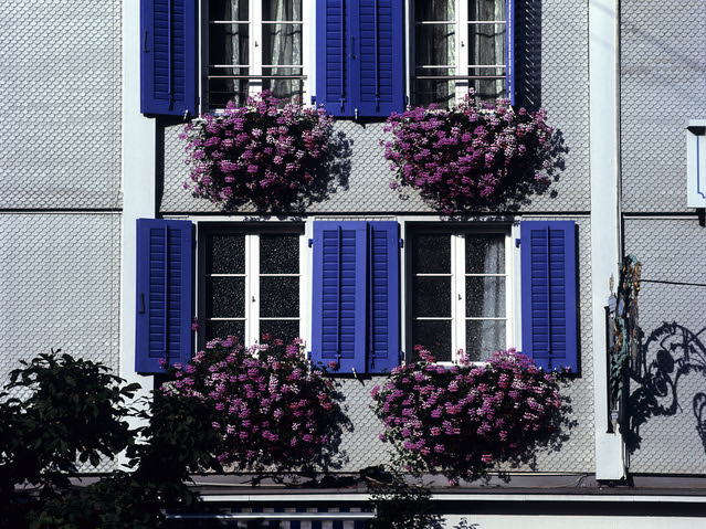 Fleurs de Suisse - 3  (MF Velvia 100)
