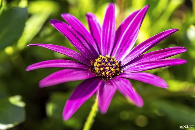 81_100 x Flowers