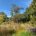 Autumn at Knoll Gardens #2