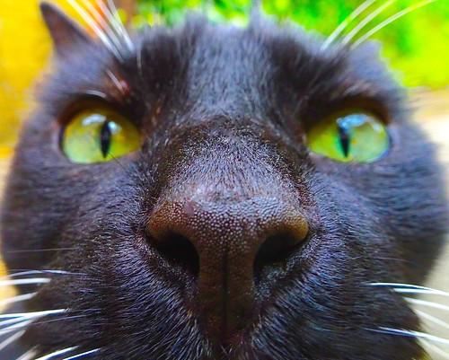 Garden jaguar ?