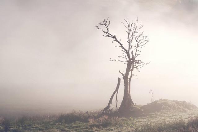 Lone Tree in the Mist, Glen Devon