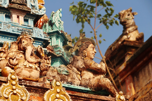 Chidambaram - Indian Squirel - Tillai Nataraja Temple