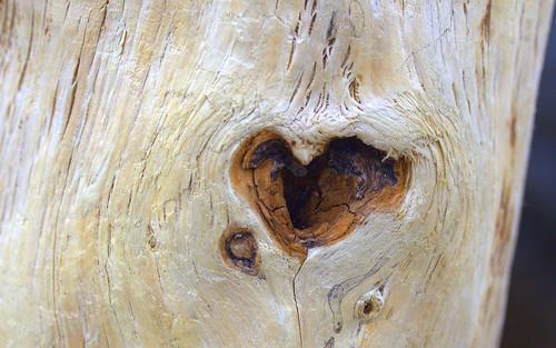 A Driftwood Heart