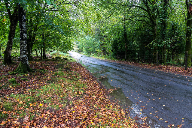 Very wet around Burrator - NK2_8329