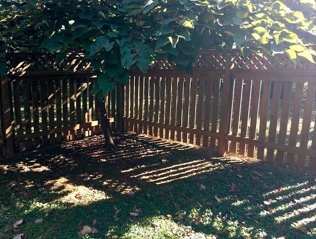 backyard shadowplay