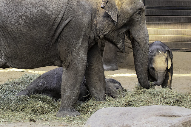 Im Elefantenhaus Hagenbeck