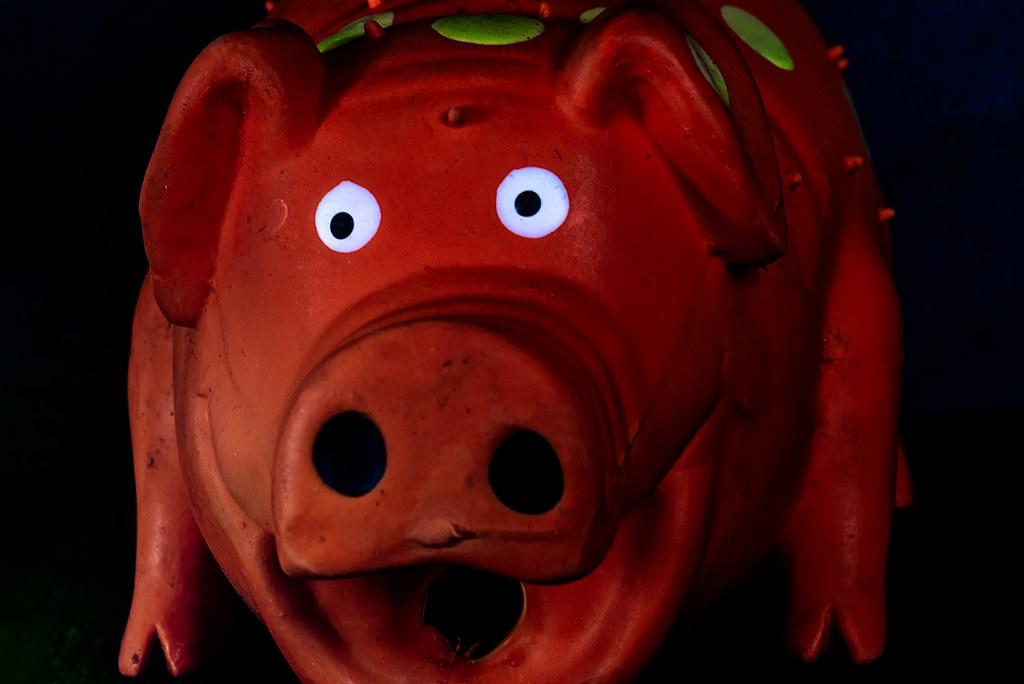 dog toy - pig