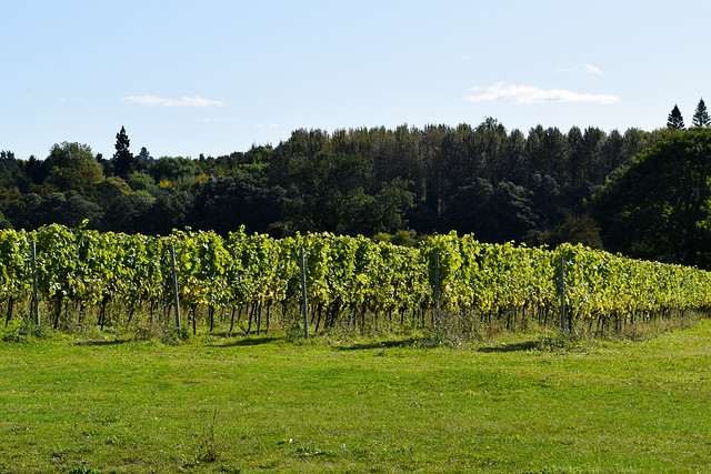 Squerryes Vineyard