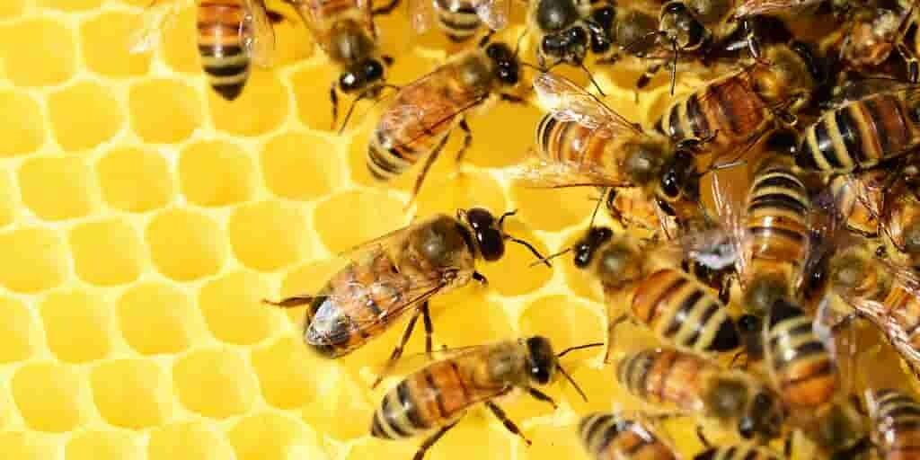 abeilles-erreurs-punitions