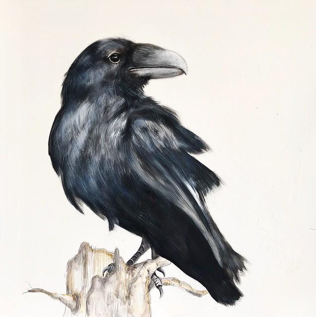 cuervo 50 x 50