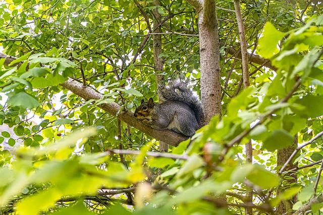 Squirrel outside my window (DSCF3302)
