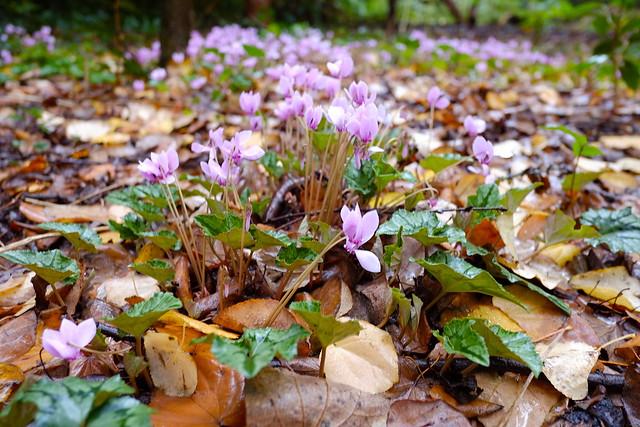Woodland Flora @ Nymans