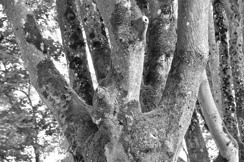 Tree trunk cemetery 14.07.2019