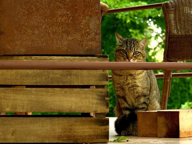 Diese Katze beobachtet uns auf unserer Terrasse.
