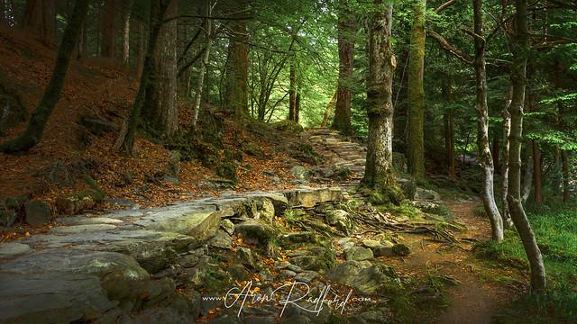 Path To Betws-Y-Coed