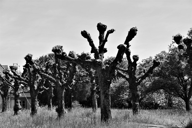 Trees 23.05 (1)