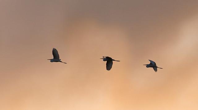 Three amigos of Shelly Lake