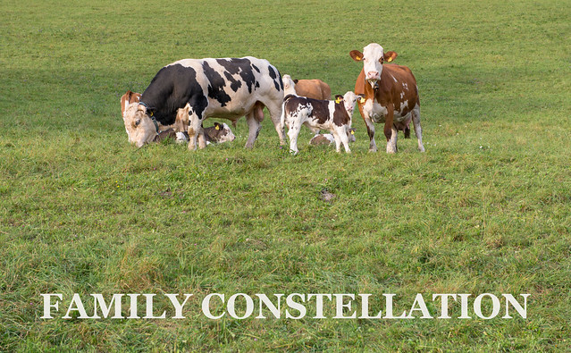 FAMILY CONSTELLATION (EARTH)